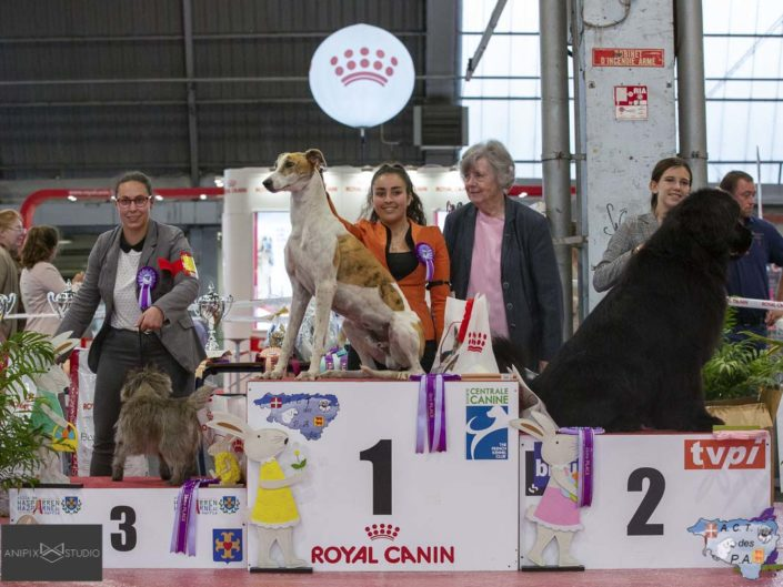Podium Expo Canine Internationale Pau Avril 2019