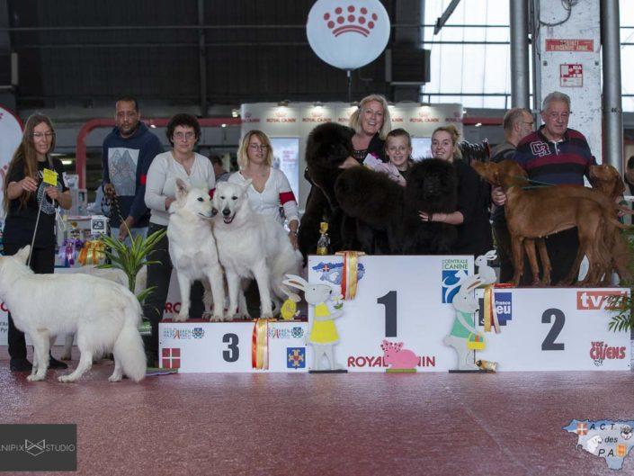 Expo Canine Pau Avril 2019