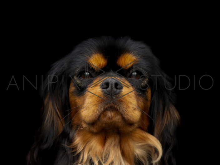 Chien-Photographe-canin-animalier