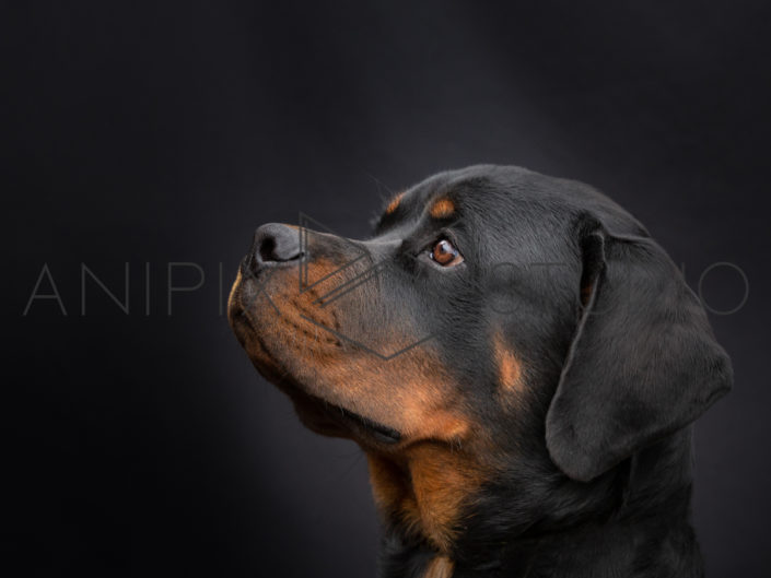 Chien-photographe-canin