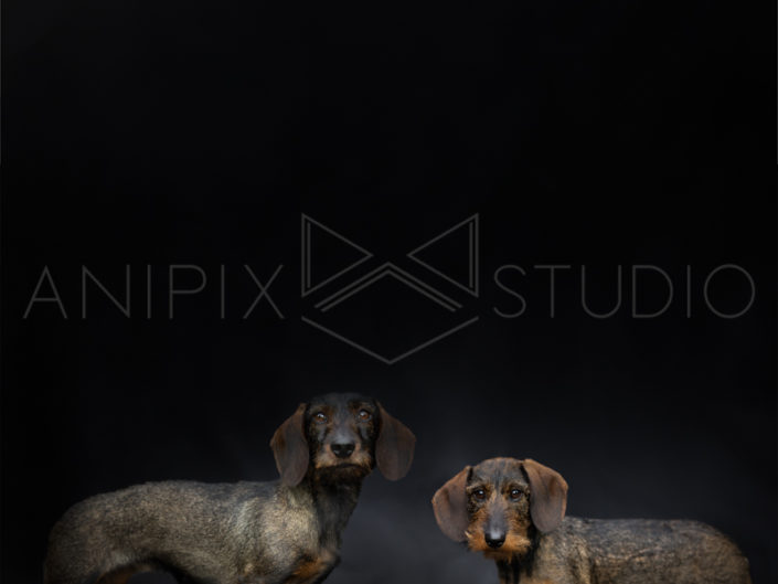 Chien-Teckel-couple-photographe-canin