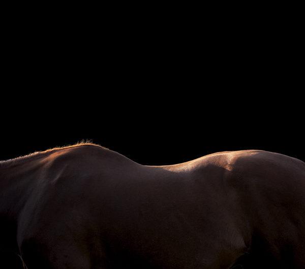 Photographe equestre chevaux bordeaux toulouse