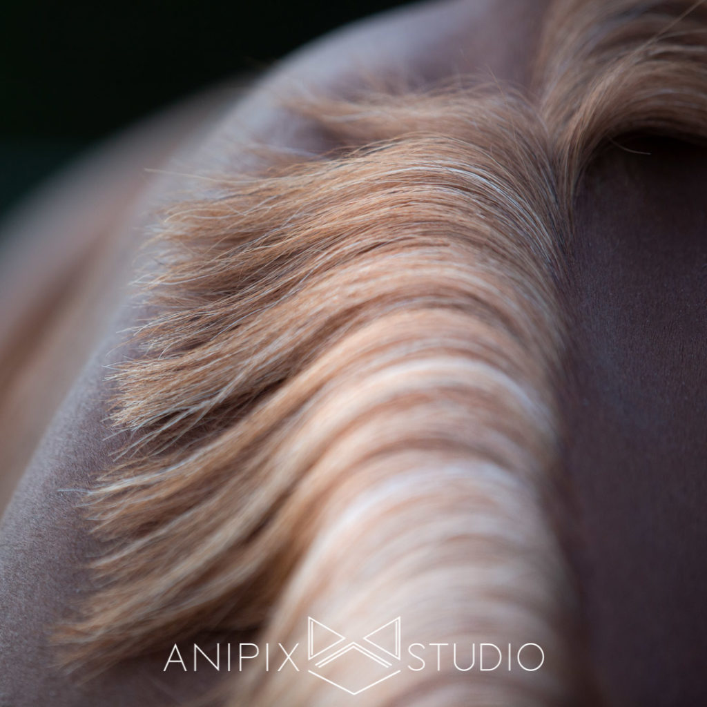 Photographe équin chevaux bordeaux toulouse
