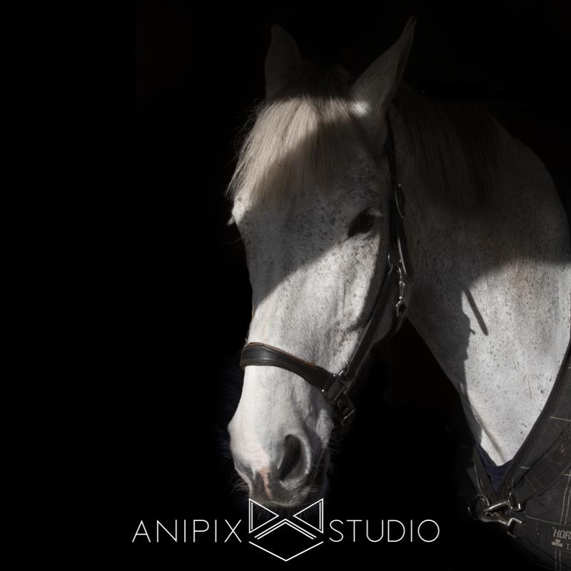 photographe chevaux art équin Bordeaux Toulouse
