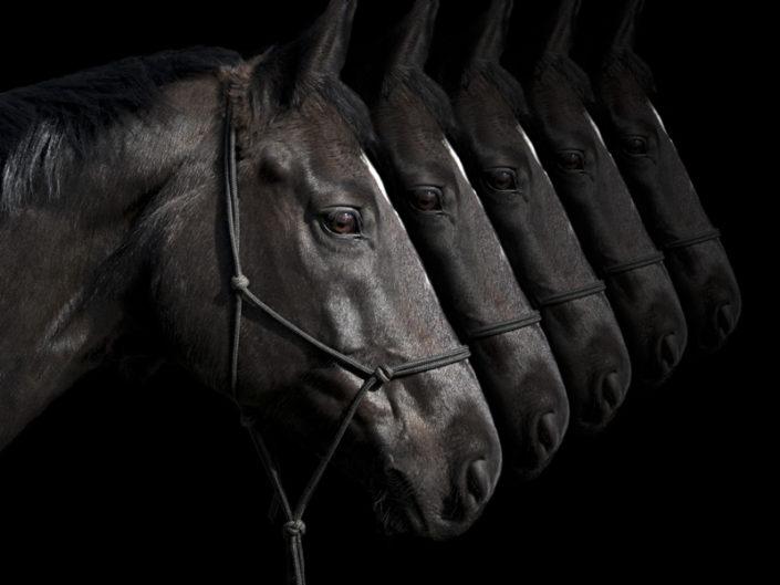 Les chevaux du centre sportif EE Kerdoen