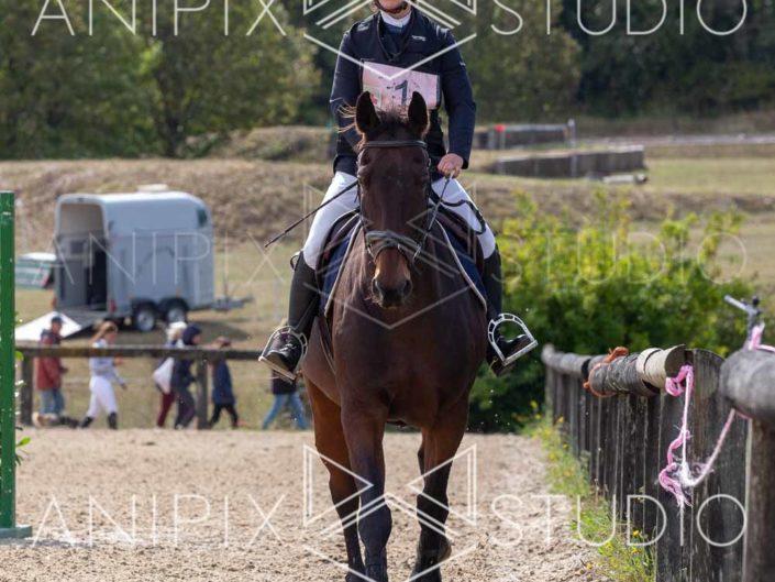 photographe équestre concours saut obstacle concours complet equitaion dressage bordeaux