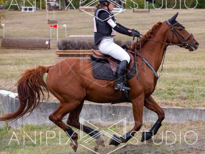 photographe Equestre concours complet saut d'obstacle cross poitou charentes