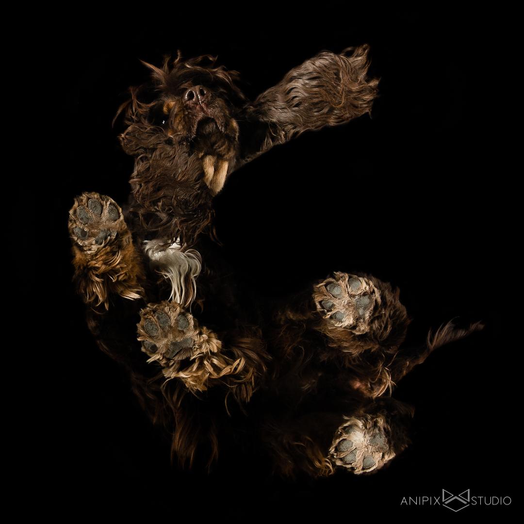 photographe animaux chien chat chevaux bordeaux