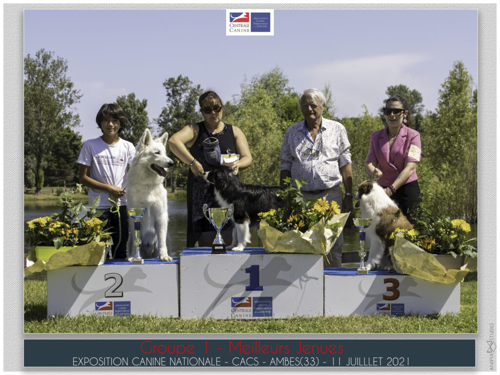 Photographe chiens chats chevaux gironde