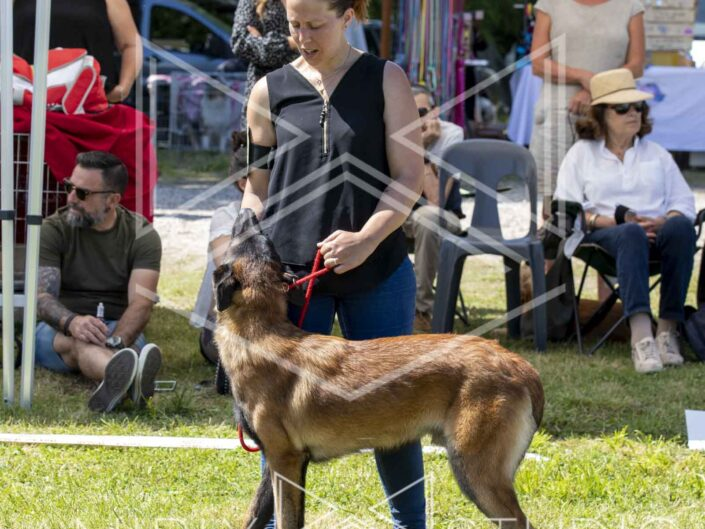 Photographe chiens chats chevaux