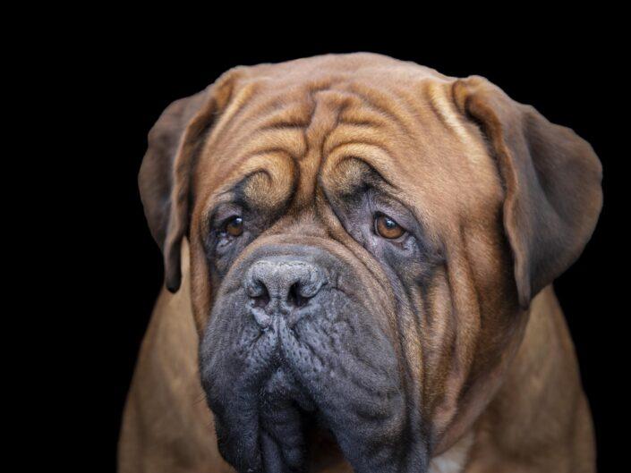 Exposition canine CACS Lanton Octobre 2021
